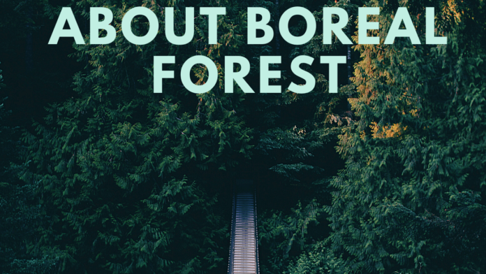 About boreal forest